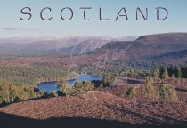 Cairngorms & Rothiemurchus, Highlands Postcard (H Std CB)