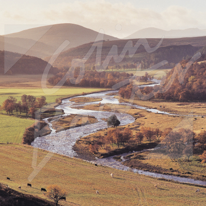 Strath Avon, Moray Greetings Card (CB)