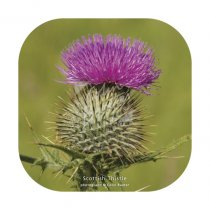 Scottish Thistle 2 Coaster