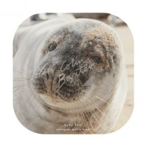 Grey Seal Coaster