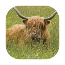 Highland Cow (Machair) Coaster