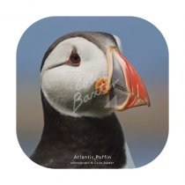 Atlantic Puffin Profile Coaster