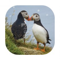 Atlantic Puffin Pair Coaster